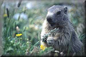Marmot s5